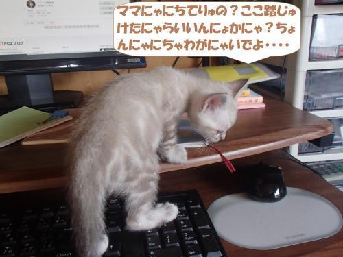 PA090377_convert_20171014132937.jpg