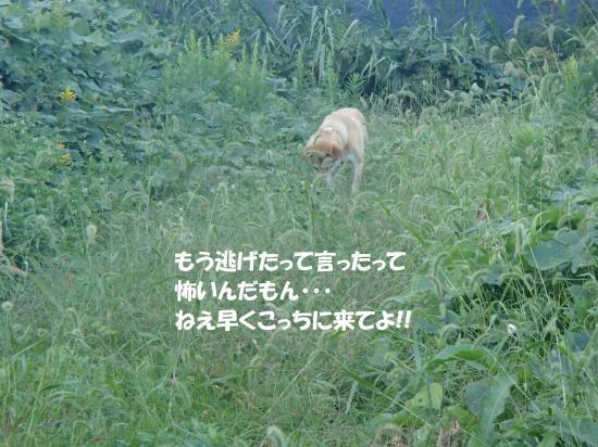 PA130418_convert_20171019114853.jpg