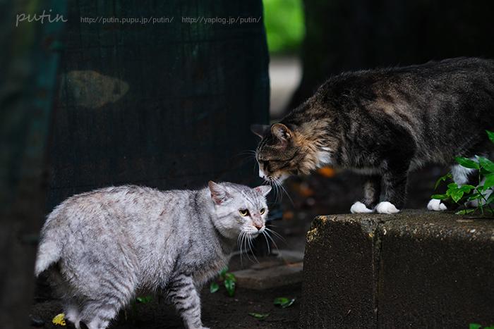 nekoyuhi_putin_owner1798706.jpg