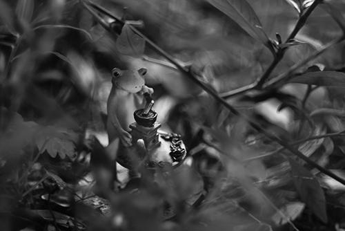 ツバキアキラが撮ったカエルのコポー。Helios44レンズでレトロな白黒写真。草むらの影で珈琲を挽くコポー。