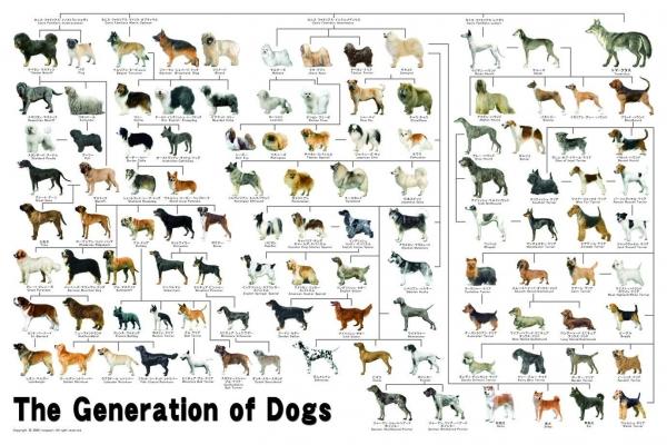 20171008 犬の進化系統図