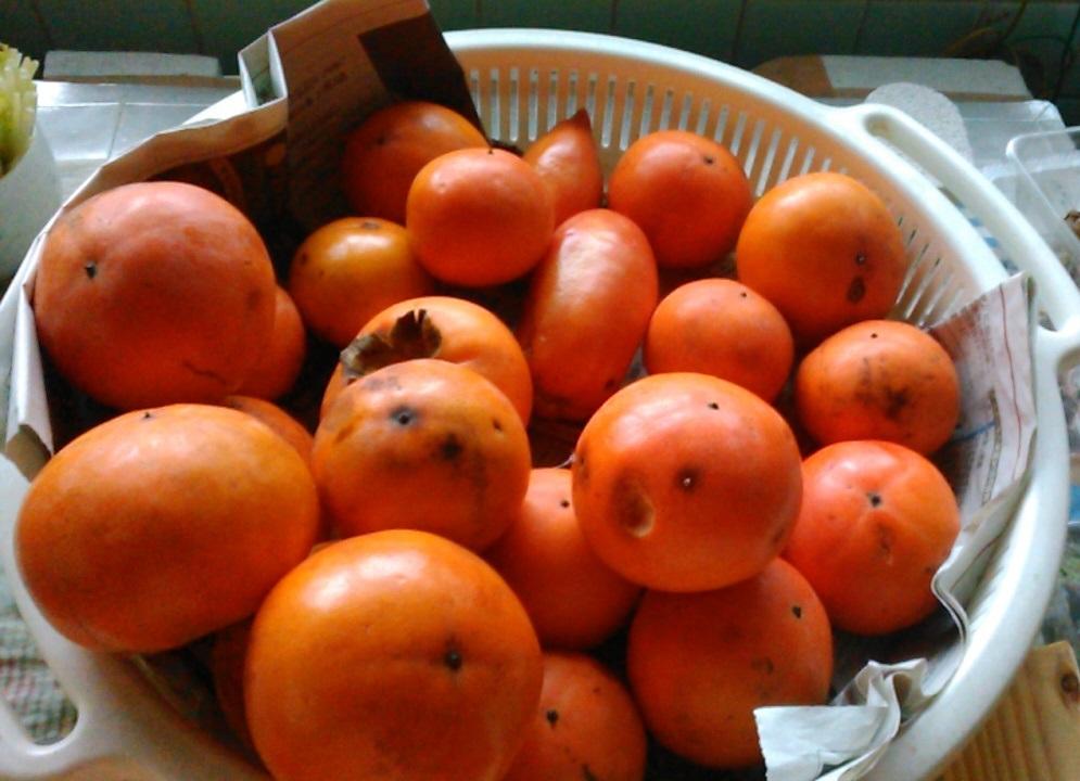 KIMG2567オレンジの秋