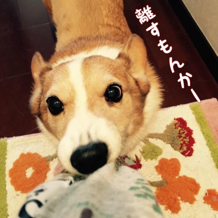haccyakejiro1.jpg