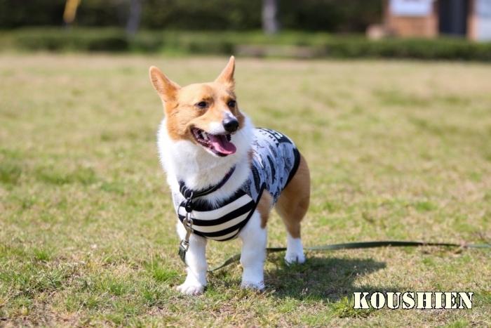 koushien91.jpg