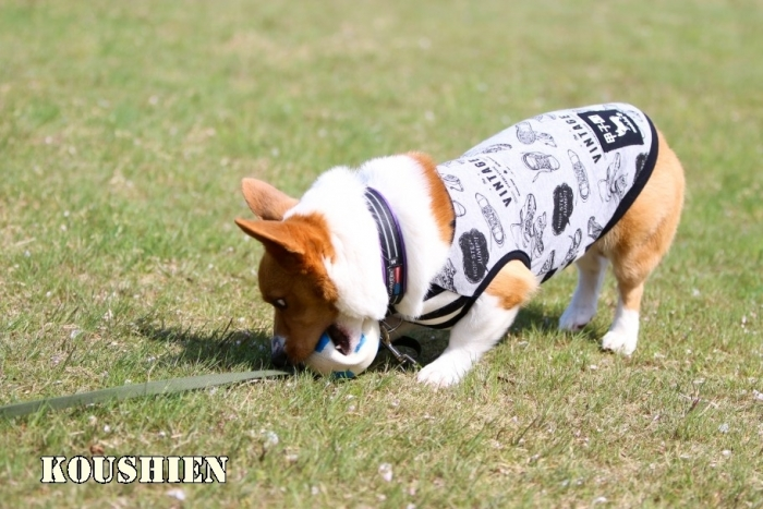 koushien92.jpg