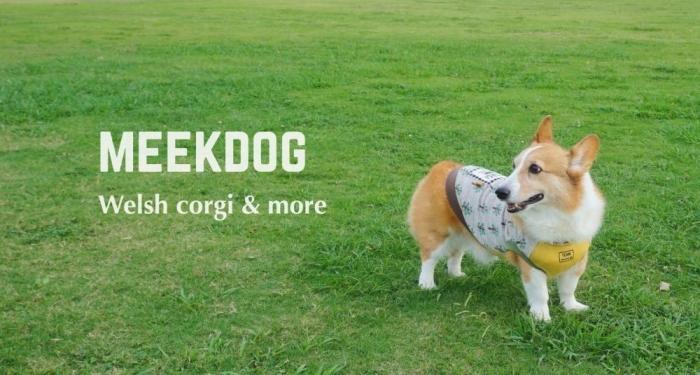 meekdog77937.jpg