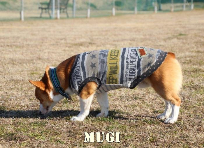 mugi91.jpg