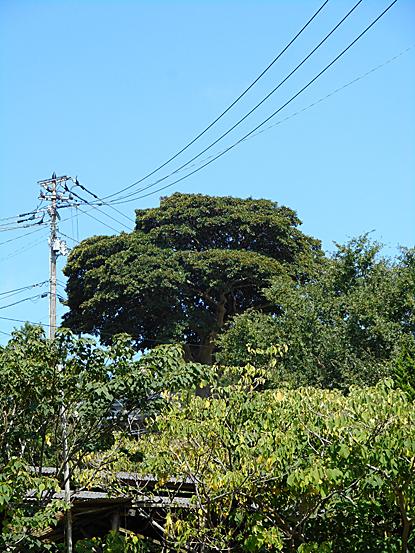 mochi-05.jpg