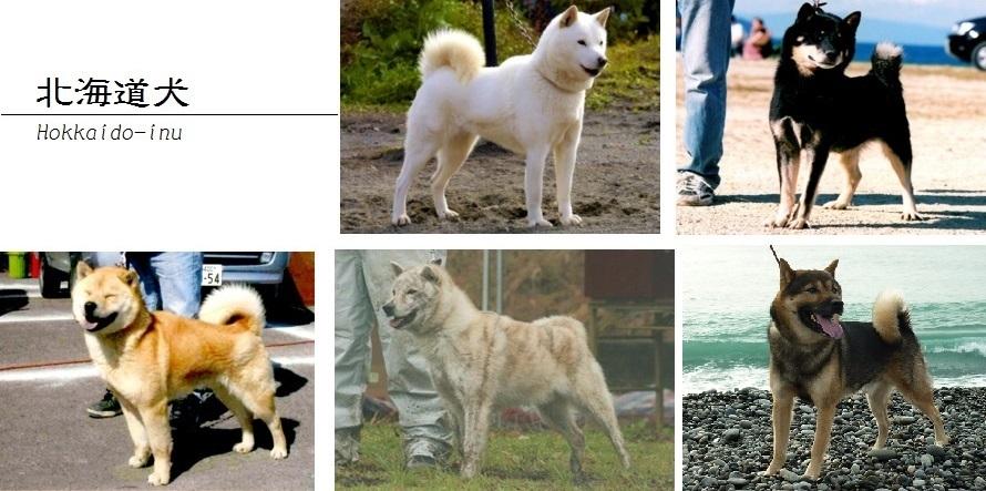 北海道犬画像04-02
