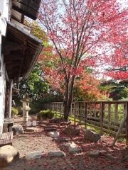 散り敷く桜の紅葉