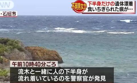 サメ 沖縄 石垣島