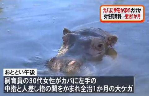 カバ 八木山動物公園 エサやり 飼育員