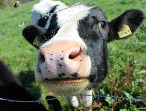 牛 牧場 ダイイングメッセージ 北海道