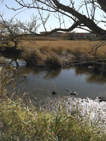 旧桜川水路