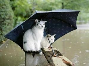 雨宿りネコ