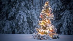 野外のクリスマスツリー