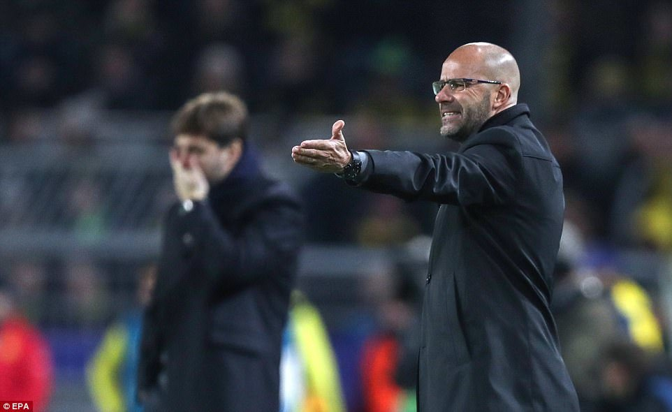 Dortmunds head coach Peter Bosz reacts with frustration while Tottenham manager Mauricio Pochettino watches on behind