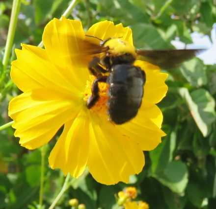 クマバチ4