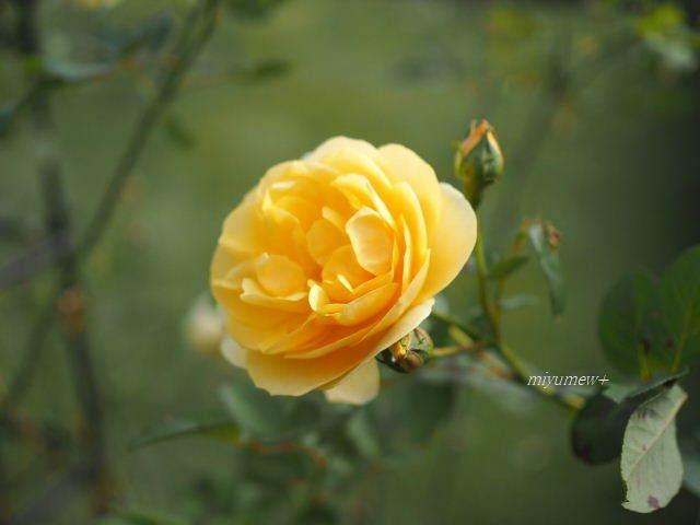 yellow171103