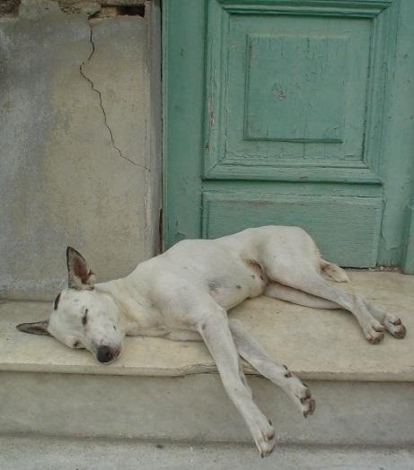睡眠 犬 リラックス