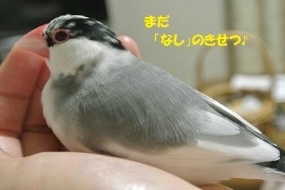 DSC_7857済
