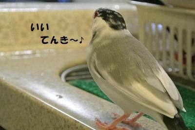 DSC_7957済