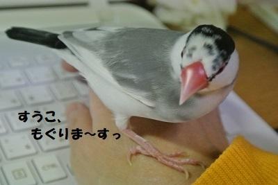 DSC_8089済