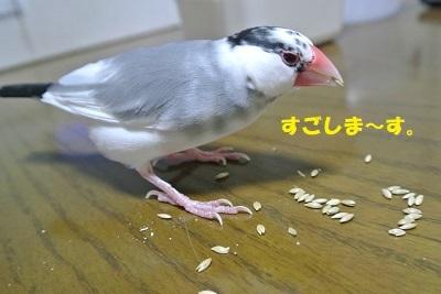 DSC_8117済