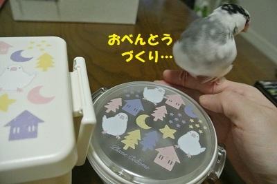 DSC_8101済