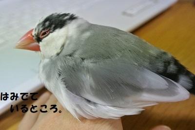 DSC_8127済