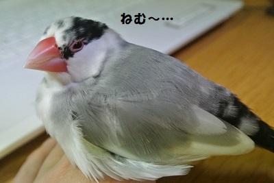 DSC_8128済