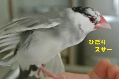DSC_8161済