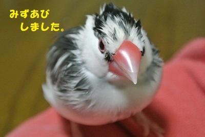 DSC_水浴び2