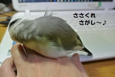 DSC_8119済