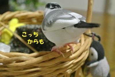 DSC_7944.jpg