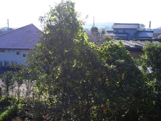 DSCN7403sentei01.jpg