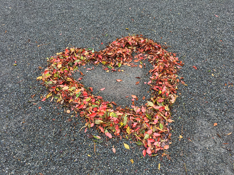 1267-落ち葉のハート