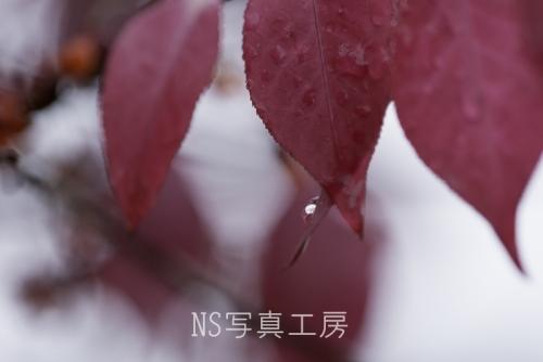 _DSC1301.jpg