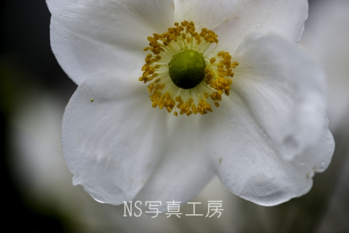 _DSC1334.jpg