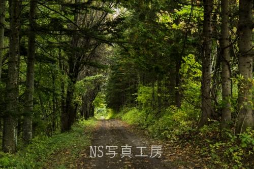 _DSY3844.jpg
