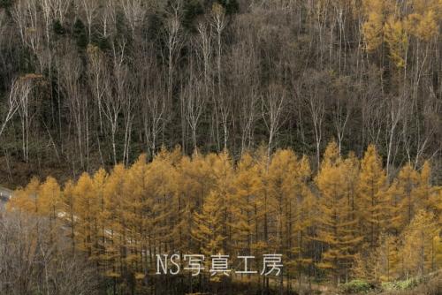 _DSY4239.jpg