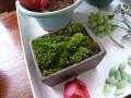ナンフェア 苔 ミニ鉢