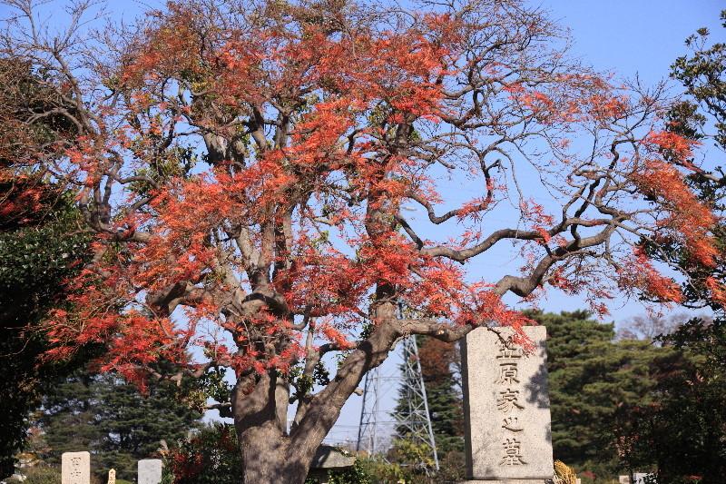 20171127多磨霊園 - 66