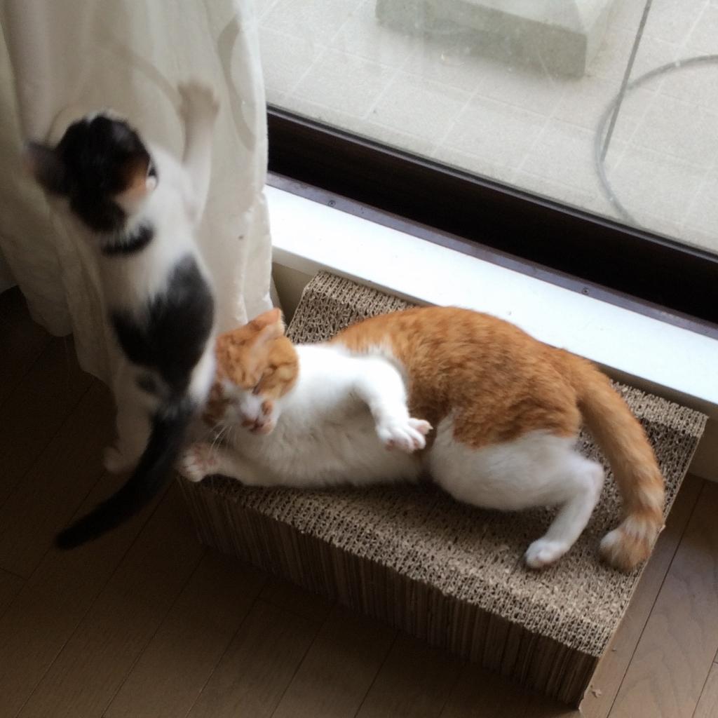 うー&つぐみ (14)