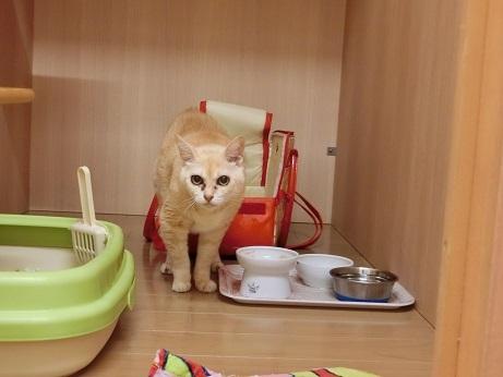 キティ (3)