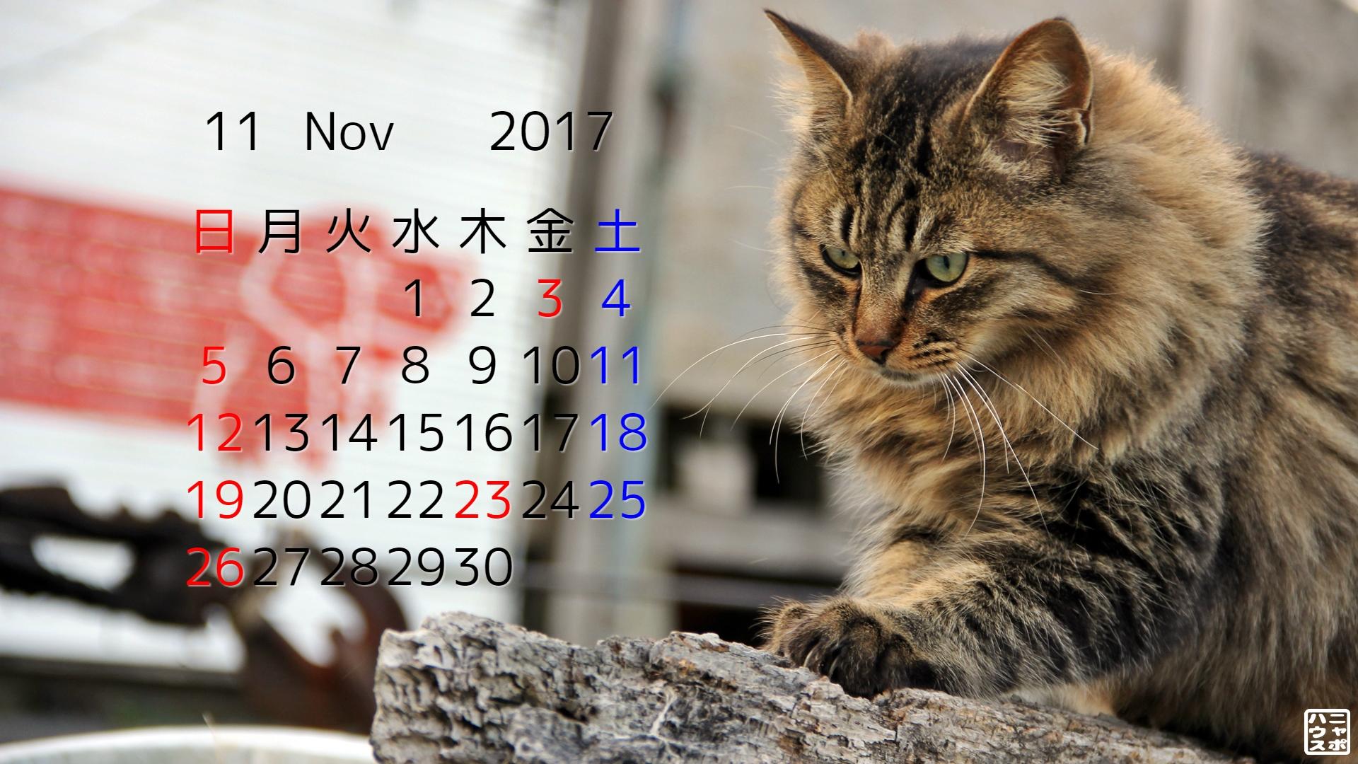 2017年11月 猫デスクトップカレンダー