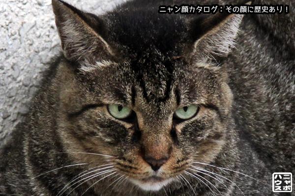 ニャン顔NO104 キジトラ猫さん