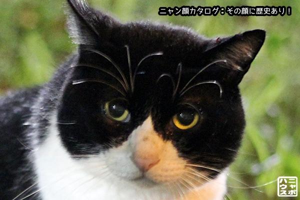 ニャン顔NO107 シロクロ猫さん