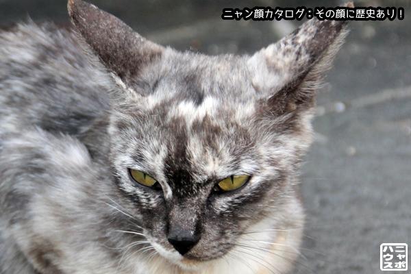 ニャン顔NO120 マーブル猫さん