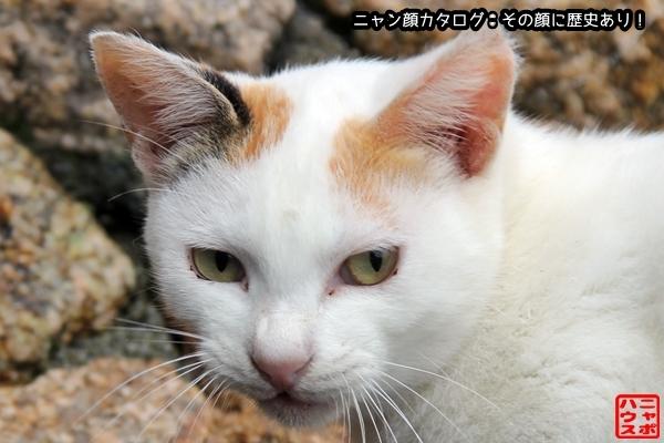 ニャン顔NO112 白多めな三毛猫さん